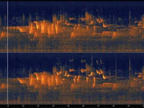 Image result for Spectrograms bird andrew skeoch""