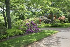 using plants in partial shade