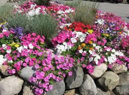 planting a fall flower garden