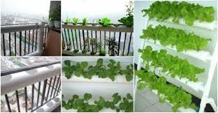 vegetable garden alices gardening ideas
