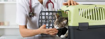 feline chronic kidney disease