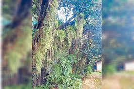 Quarantine Gardens Philstar Com