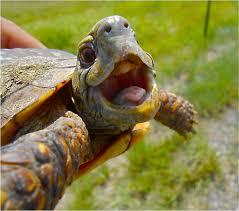 Post Turtles Jokes
