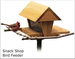 building birdhouses and bird feeders