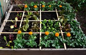 square foot gardening bonnie plants