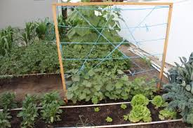 25 Functional Diy Cucumber Trellis Ideas Balcony Garden Web