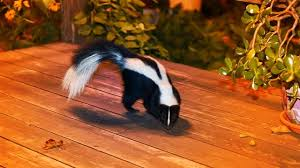 How To Keep Skunks Out Of Your Yard Realtor Com