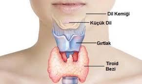 Tiroit-Tiroid Bezi Nedir? Hastalıkları Nelerdir? Tedavi Yöntemleri