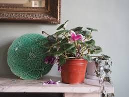 indoor garden pot and planter ideas