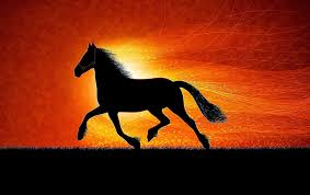 awesome horse wallpaper background