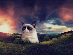 grumpy cat wallpaper 1024x768