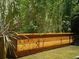 Bamboo For Privacy Screening Bamboo Sourcery Nursery Gardens