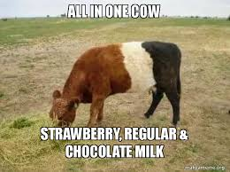 Image result for cow meme