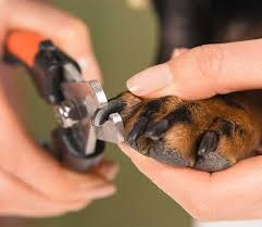 how often should i trim my dog s nails