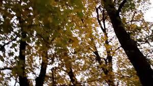 مشاهد للمونتاج اشجار شجر Hd Video Background Youtube