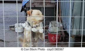 The Dog Is Barking Behind A Fence A Dog On A Chain On A Leash Near The Dog House Stood On Two Legs Grabbed His Front Paws