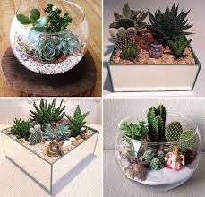 small garden in a glass bowl