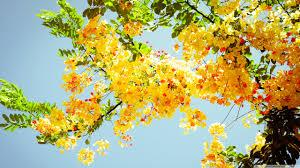 beautiful flowers ultra hd desktop