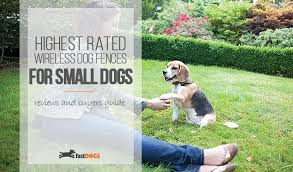 Best Wireless Fence For Small Dogs Reviews Fast Dogs