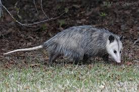 Mammals of North Carolina