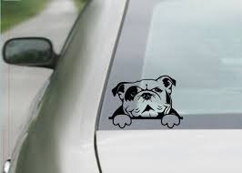 Marvelous English Bulldog Puppies Blue Eyes In 2020 English Bulldog Notebook Decal Bulldog Puppies