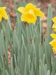 Early bloom means budding start to allergy season | KUTV