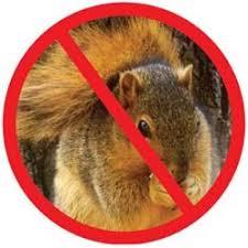 best homemade squirrel repellent home