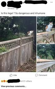 Imagine Calling Spikes On A Neighbour S Fence To Keep Bears Out Which Has Little Effect On That Cat Inhumane And Cruel As Many Commenters Called It While Three Times A Day Paying