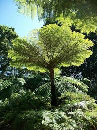 plants for shady areas stodels garden