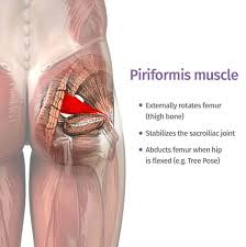 the piriformis the little muscle