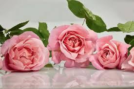 ورود وزهور طبيعية