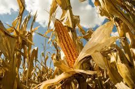 Hablemos de soberanía alimentaria | Voces en el Fenix