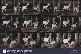 Eadweard Muybridge High Resolution Stock Photography and Images - Alamy