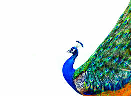 NBCU's Peacock Will Soon Take Flight: A Bold Advertising Strategy ...