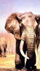 elephants wallpaper 118522