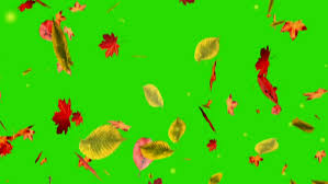 falling leaves on green screen stock
