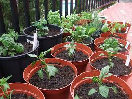 easy container vegetable gardening in 7