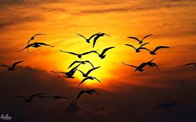 تحميل احلي خلفيات طيور 2016 حمل اجمل خلفيات طيور حلم النسيان