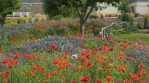 how to sow your own wildflower meadow