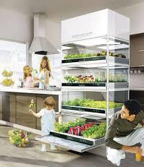 indoor herb garden in kitchen cabinet
