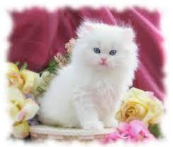 صور قطط متحركة صور قطط كيوت هل تعلم