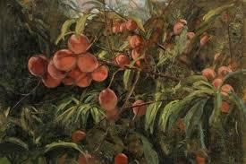 Peaches by Clarice Smith on artnet