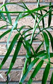 add these 5 nontoxic houseplants to