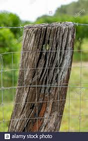 Barbed Wire And Fencing Net On A Support Made Of The Trunk Of A Very Old Tree Close Up Stock Photo Alamy