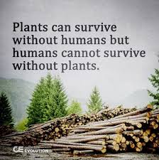 Plants can survive without humans but... - Seedlings for SALE ...