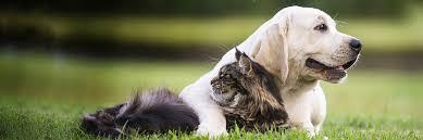 Cat Fences Hidden Boundaries Dogwatch Of Southwest Virginia
