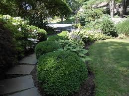 deer resistant plants for shade garden