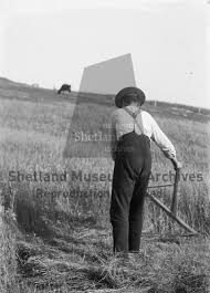 Shetland Museum and Archives::Johnnie Smith sycthing corn at Houlland