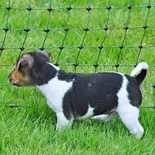 Fencing Business Industry Science Height 90cm 2 Spikes Green 11 Netmaster Posts Voss Farming Farmnet 25m Premium Electric Fence Sheep Netting