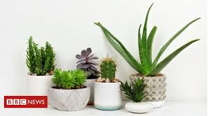 houseplants bad for the environment